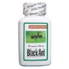 Черна кралска мравка - при ревматоиден артрит и автоимунни
