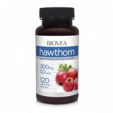 HAWTHORN 300mg 120caps - за здравето на сърцето и сърдечно-съдовата система, мощен антиоксидант