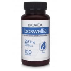 BOSWELLIA - 250mg - противовъзпалител, укрепва ставите и хрущяла